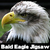 Bald Eagle Jigsaw