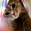 Cat Really Cute 3