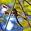 Dragonfly Jigsaw Puzzle