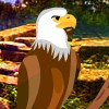 Yal Owl Sanctuary Escape
