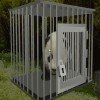 Baby Panda Escape