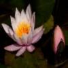 Aquatic Plants Jigsaw