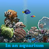 In an aquarium