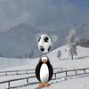 Penguin Soccer Star