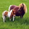 Cute Pony Puzzles