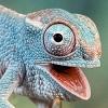 Puzzles Chameleon