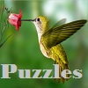 Puzzles with hummingbirds.