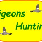 Pigeons Hunting